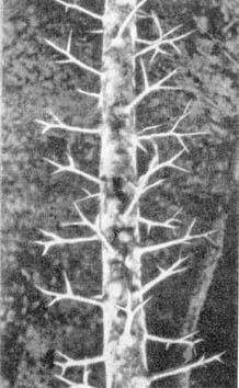 Причудливые деревья