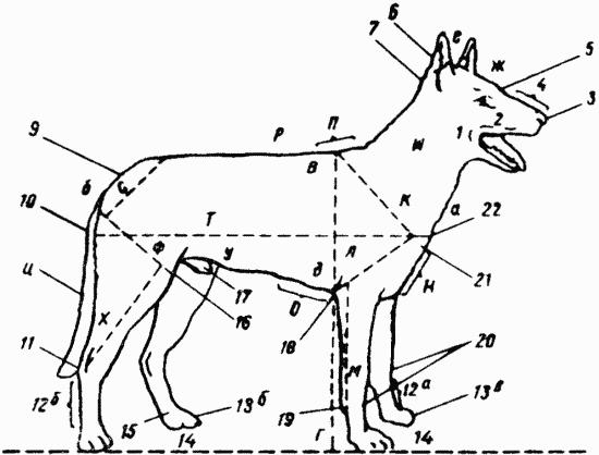Техника дрессировки служебных собак