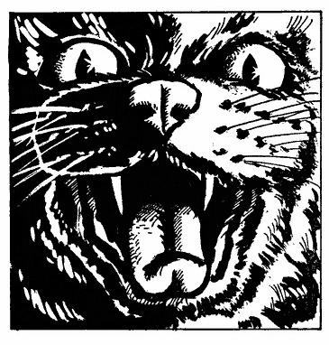 Бойся Кошек