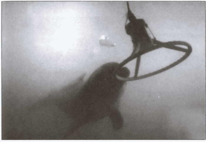 Морские дьяволы