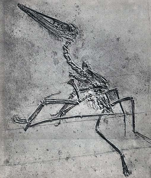 Летающие ящеры и древние птицы