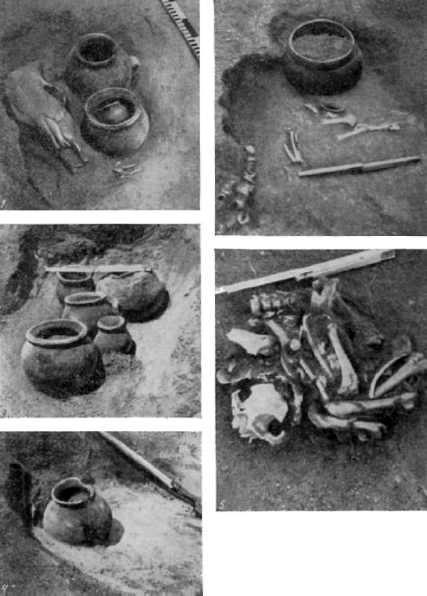 Керамика из погребений раннего этапа донецкой катакомбной культуры: 3-9, 11-13 - кубки а; 1-2 - кубки б