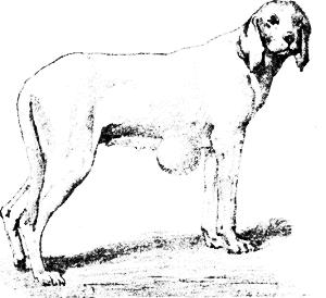 Болезни собак. Краткое руководство. Наружные болезни