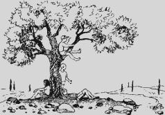 Ослокрады (с иллюстрациями)