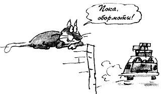 Кот без дураков